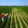 Sindicatos rurais terão orientação sobre pedido de carta ao MTE