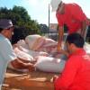 Fotos doação de sementes Prefeitura de Rondonópolis